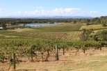 Great views from Audrey Wilkinson Wines.